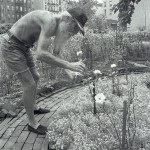 Adam_Purple_Tending_his_garden.